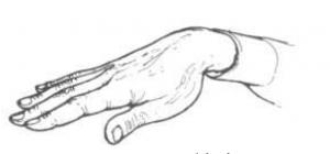 زبان بدن14